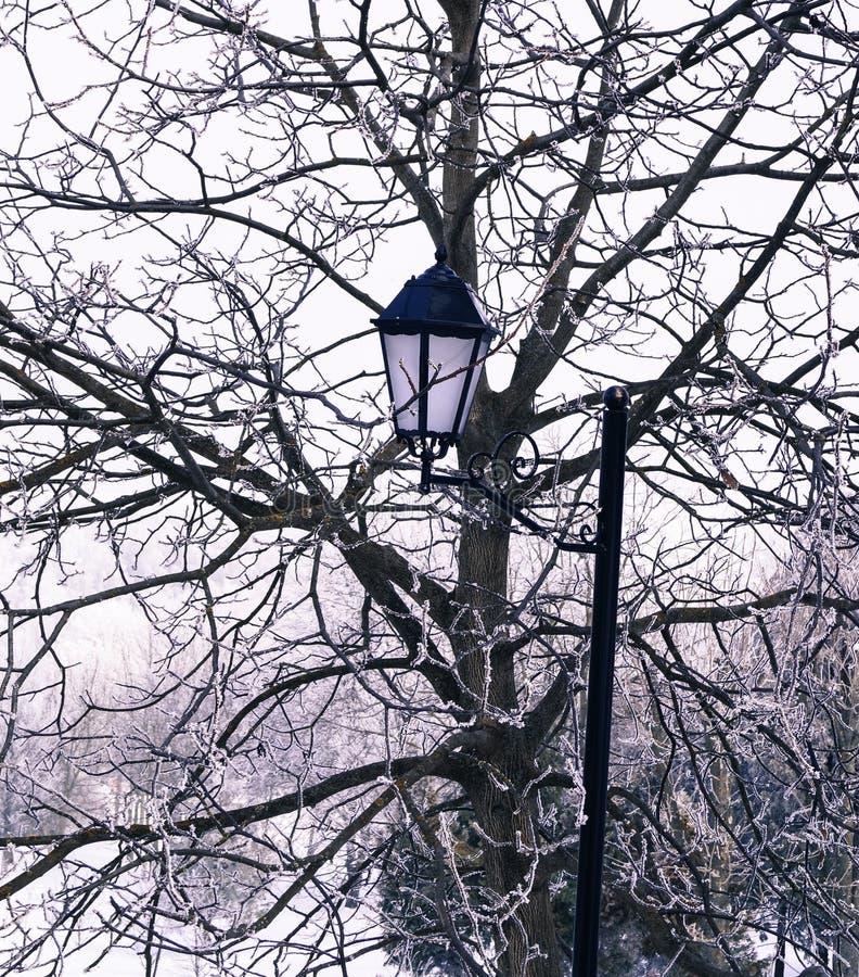 электрофонарь спрятанный среди ветвей зимы дерева стоковое изображение rf