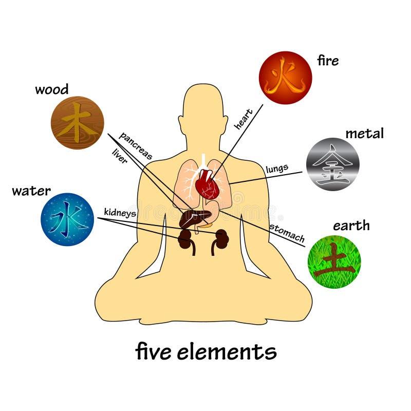 5 элементы и человеческих органов иллюстрация штока