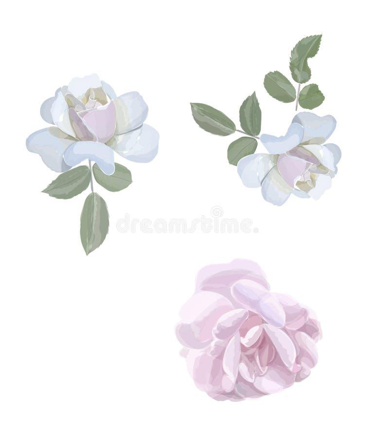 Элементы роз акварели, листья года сбора винограда иллюстрация вектора