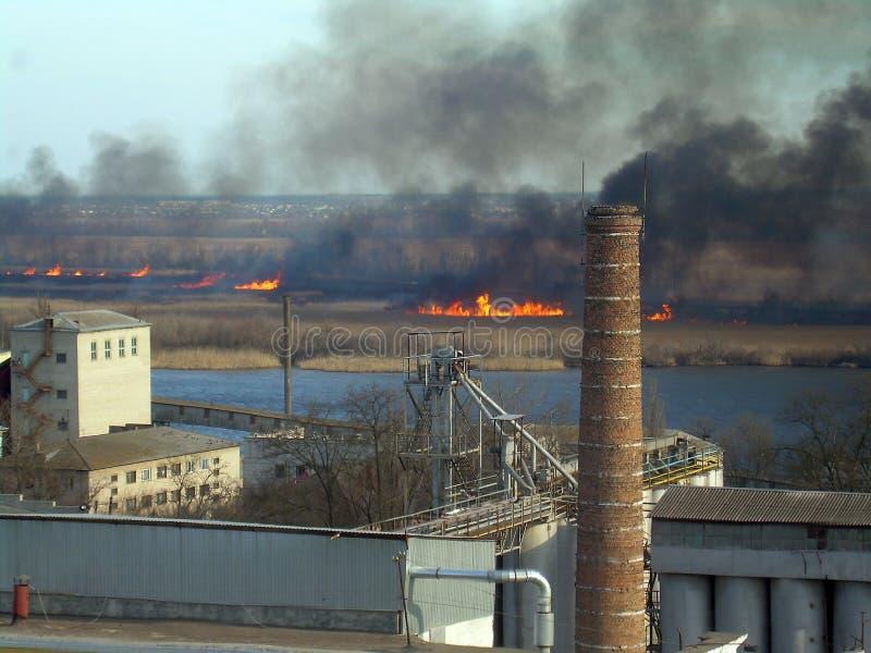 Элемент огня в природе стоковое изображение