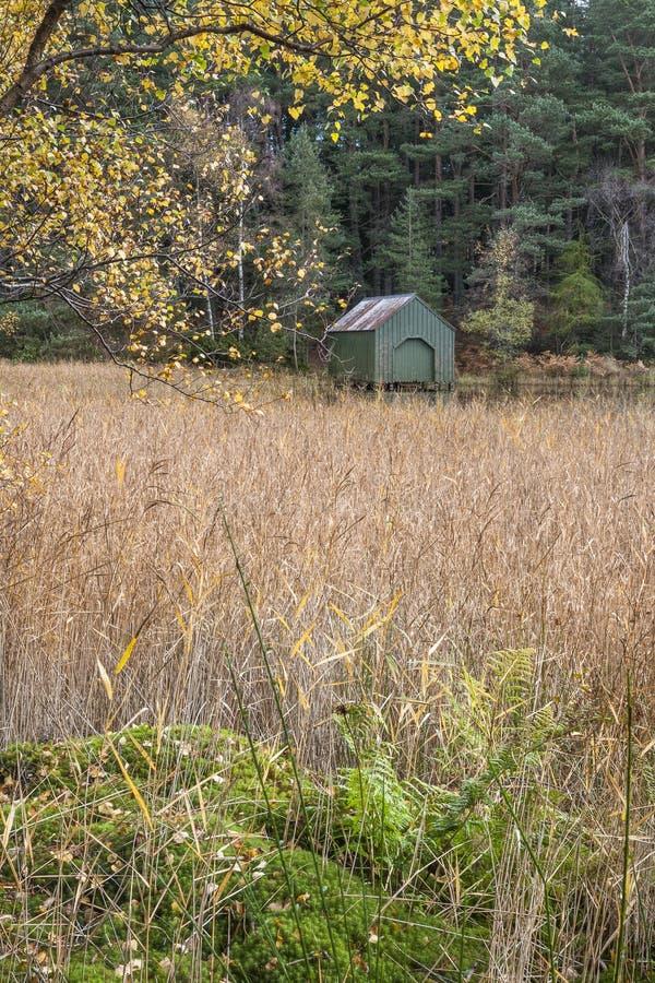 Эллинг & тростники на озере ферзей в Aboyne, Шотландии стоковые изображения rf