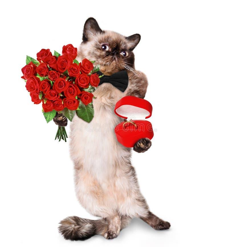 любить кота стоковые фотографии rf