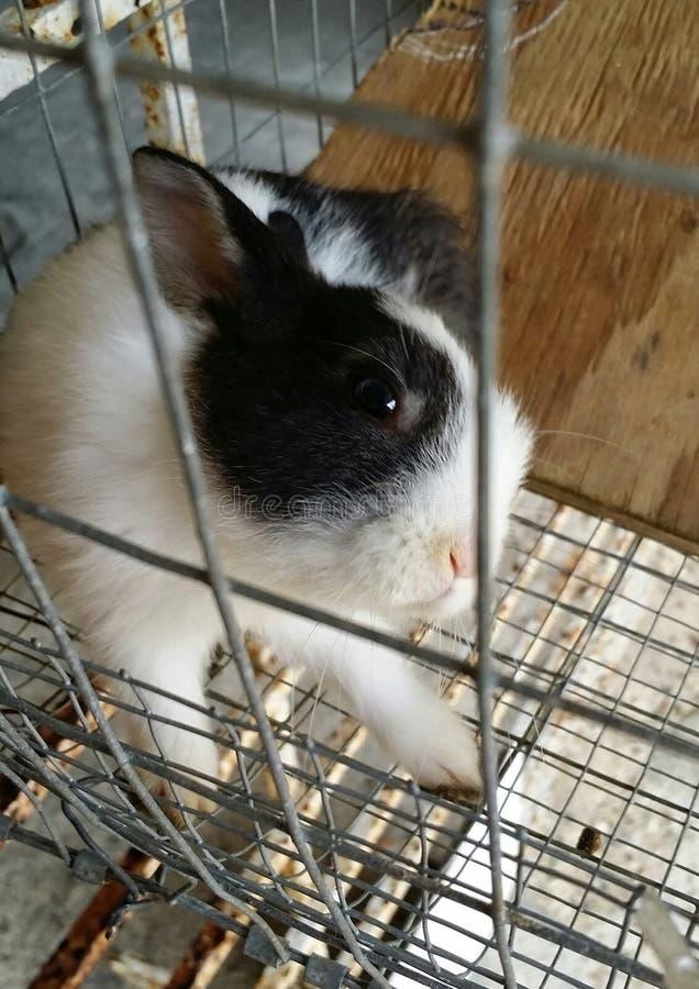любознательний маленький кролик стоковые фотографии rf