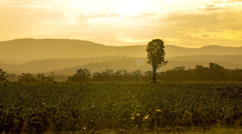 юговосточный заход солнца Квинсленда стоковые фотографии rf