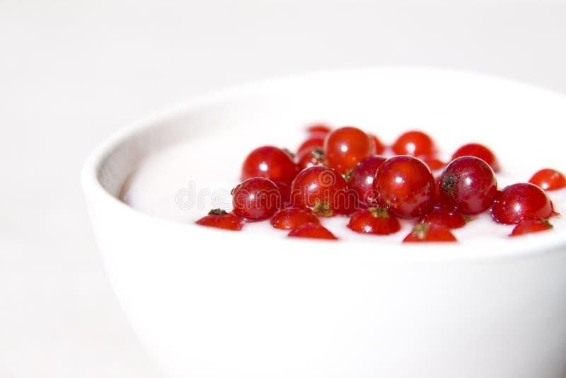 югурт красного цвета смородины стоковое фото rf