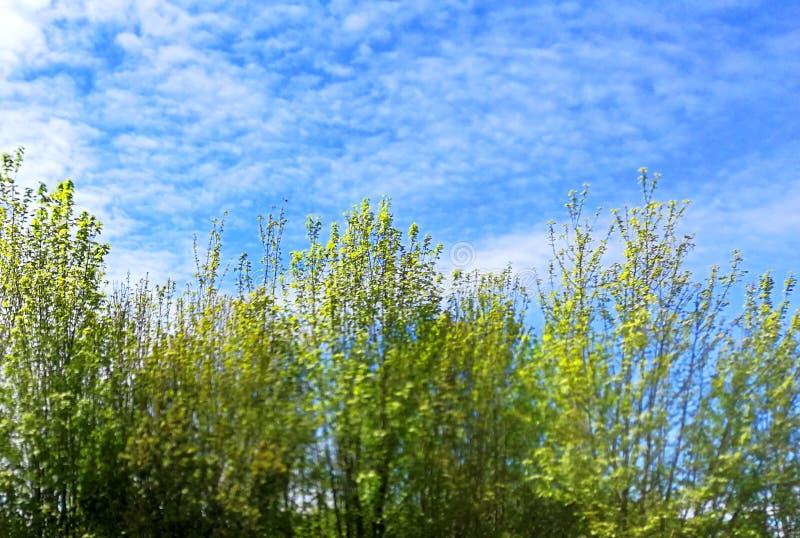 Южная Америка Чили Lago Ranco Countryside Outdoor Nature Blue Sky Green Trees Свежий воздух иллюстрация вектора