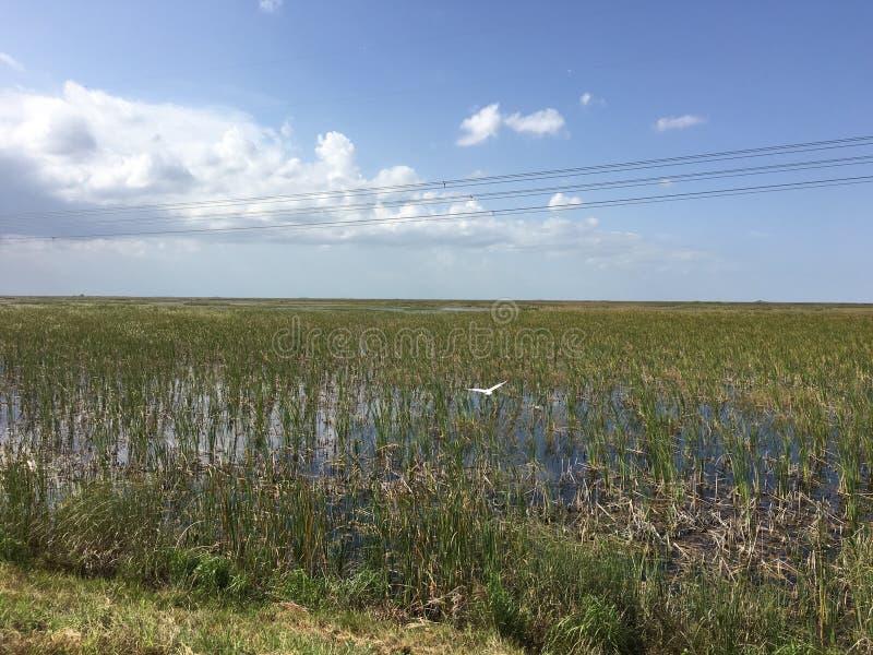 Южные болотистые низменности Флориды стоковое фото rf