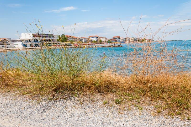 Южные заводы морского побережья растя на пляже Курортный город Paralia на побережье Эгейского моря вполне гостиниц, квартир, пляж стоковые изображения