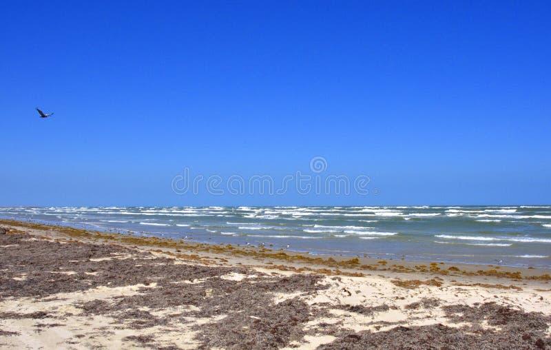 Южный Seascape Техаса стоковое изображение rf