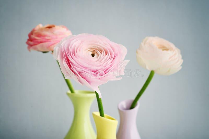 лютик цветет персиянка стоковое изображение