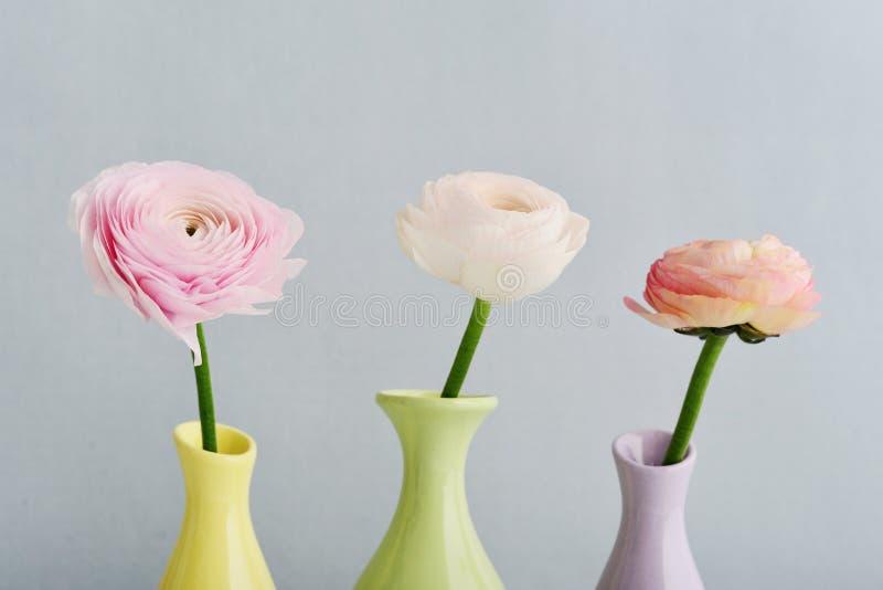 лютик цветет персиянка стоковое фото rf