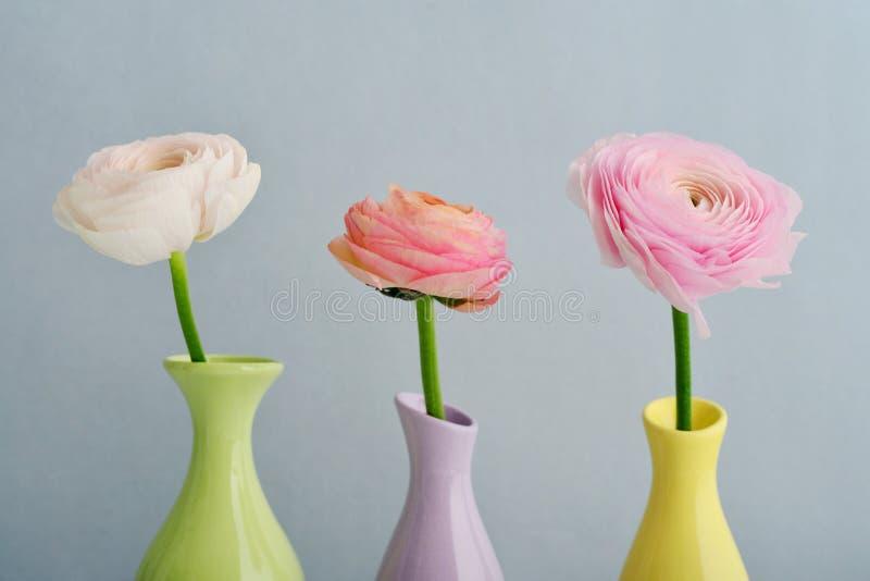 лютик цветет персиянка стоковые фото