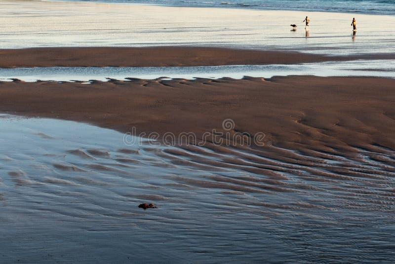 2 люд и собака бежать на песчаном пляже во время отлива на sunse стоковые фотографии rf
