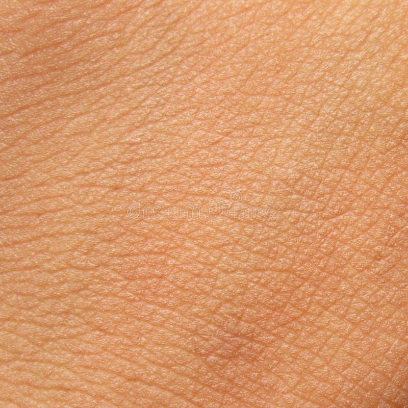 людская текстура кожи стоковые фотографии rf