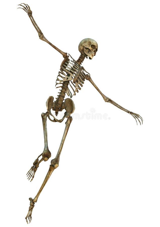 Download людской скелет иллюстрация штока. иллюстрации насчитывающей медицинско - 41655451