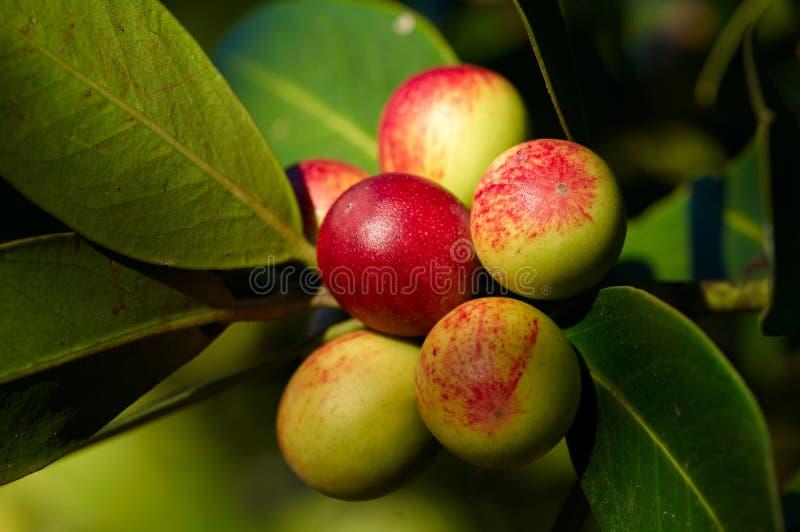 яблоки вал стоковая фотография