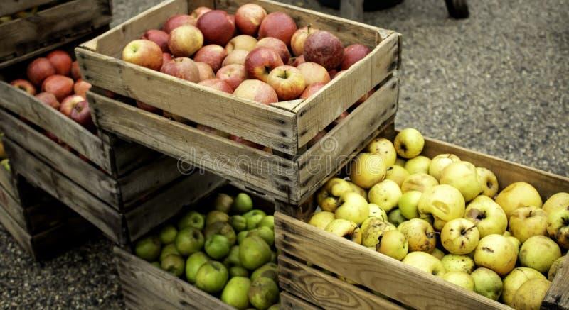 Яблоки в коробках стоковые фото
