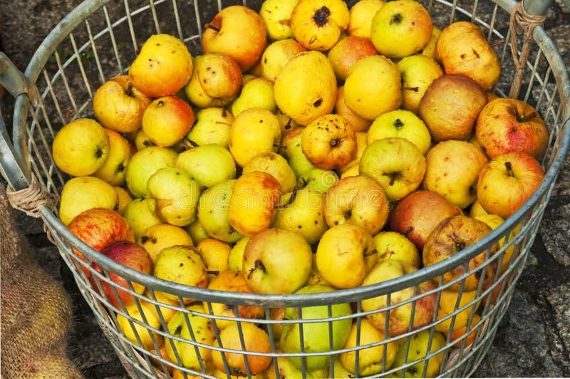 Яблоки для яблочного сока стоковое фото