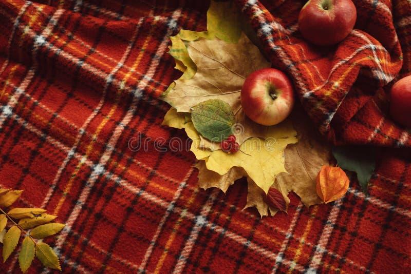 Яблоки падения листьев осени греют концепцию одеяла стоковое изображение rf