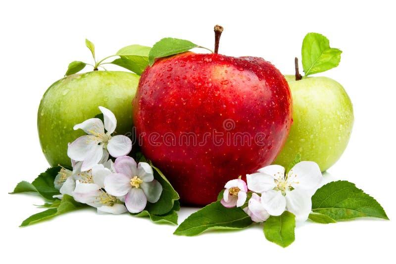 яблоки яблока противостоят зеленый красный цвет 2 стоковая фотография