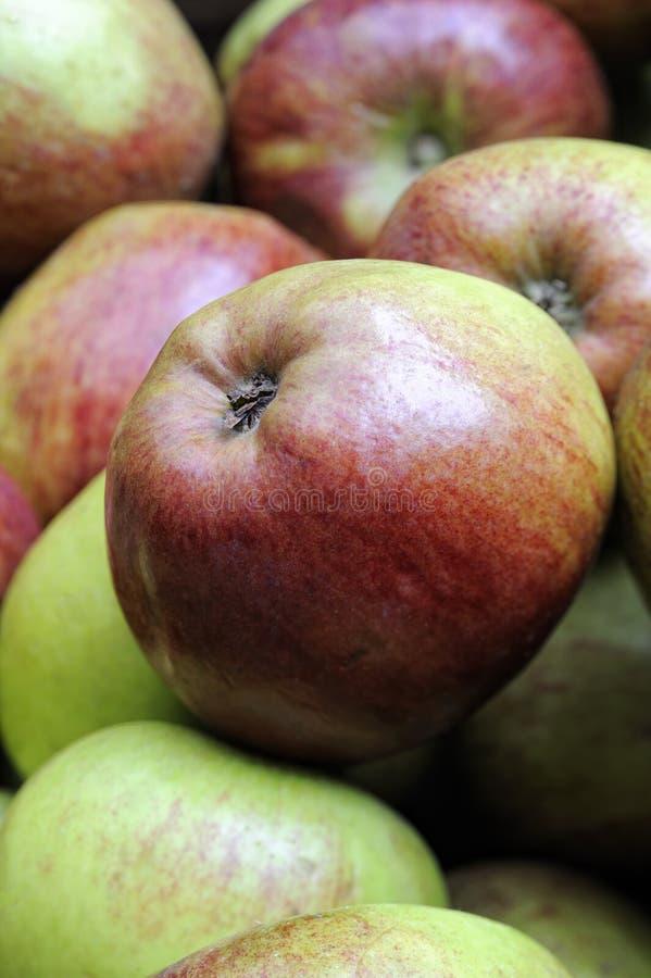 яблоко варя интерес английского howgate традиционный стоковое фото