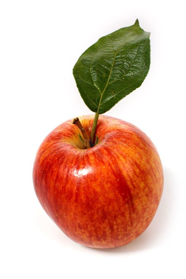 яблоко - зеленый красный цвет листьев стоковое изображение