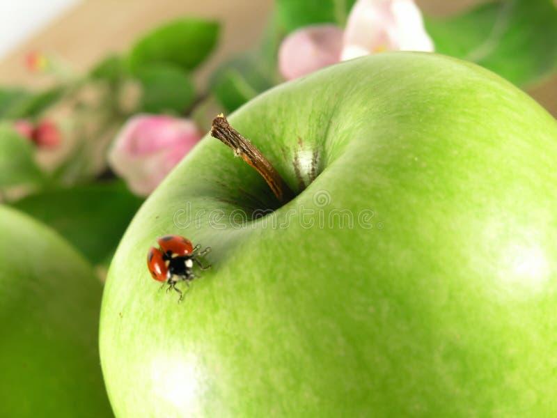 яблоко - зеленый цвет стоковые фото