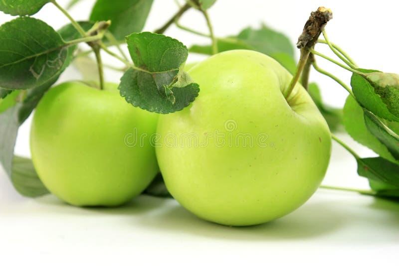 яблоко - листья зеленого цвета стоковые изображения rf