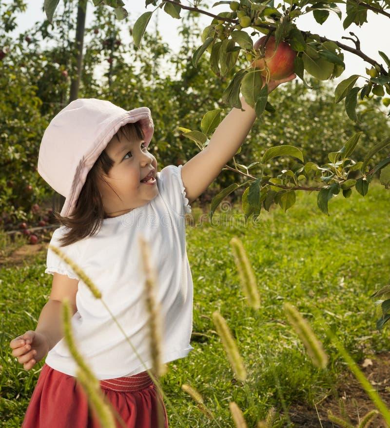 Яблоко рудоразборки девушки стоковое изображение