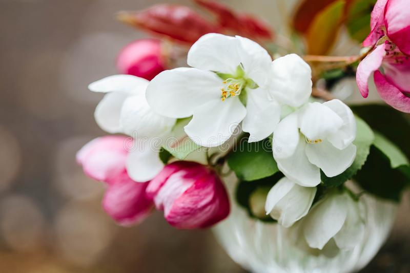 Яблоко Blossoming розовые и белые цветки Букет весны цветков яблони вал весны японии вишни предпосылки зацветая близкий флористич стоковые изображения rf