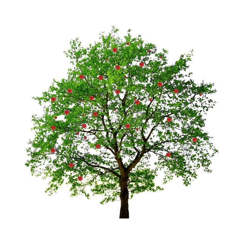 Яблоня изолировала стоковые фото
