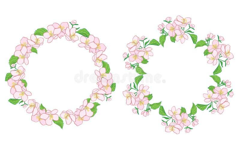 Яблоня цветет в венке - флористических рамках вектора иллюстрация штока
