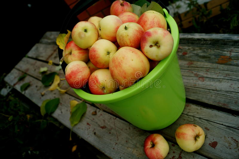 Яблоки в ведре стоковое изображение