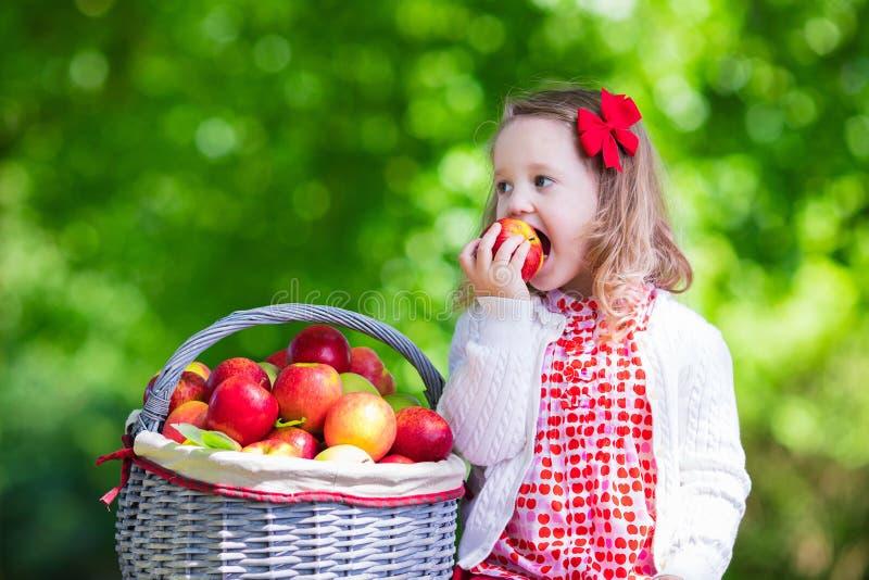 Яблоки рудоразборки маленькой девочки в саде плодоовощ стоковое изображение