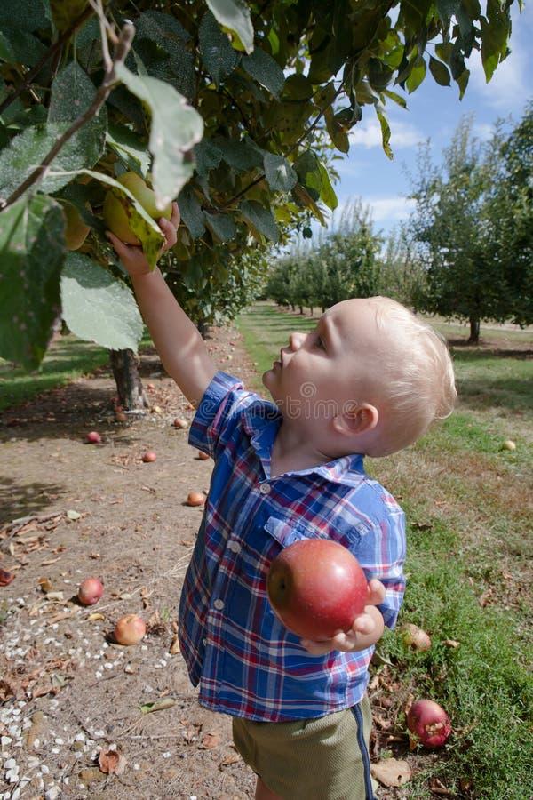 Яблоки рудоразборки мальчика стоковые фото