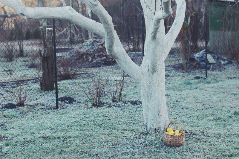 Яблоки сельской местности стоковое изображение