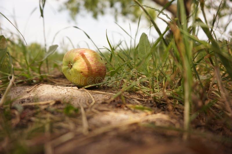 Яблоко, Ñ ¾ ¾ кРР бл стоковые фотографии rf