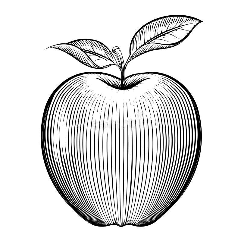 Яблоко гравировки вектора иллюстрация вектора