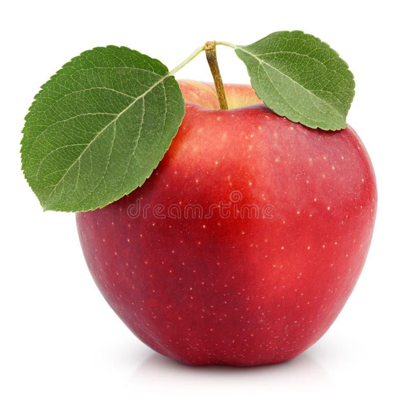 яблоко - зеленый цвет изолированная белизна взгляда сверху листьев красная стоковые фотографии rf