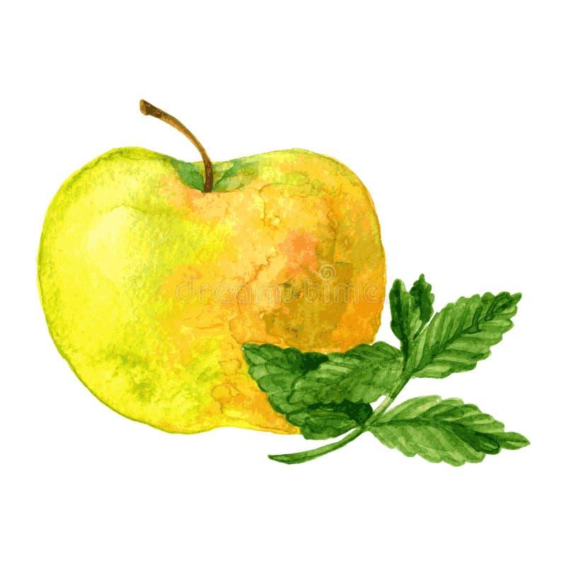 Яблоко и мята бесплатная иллюстрация