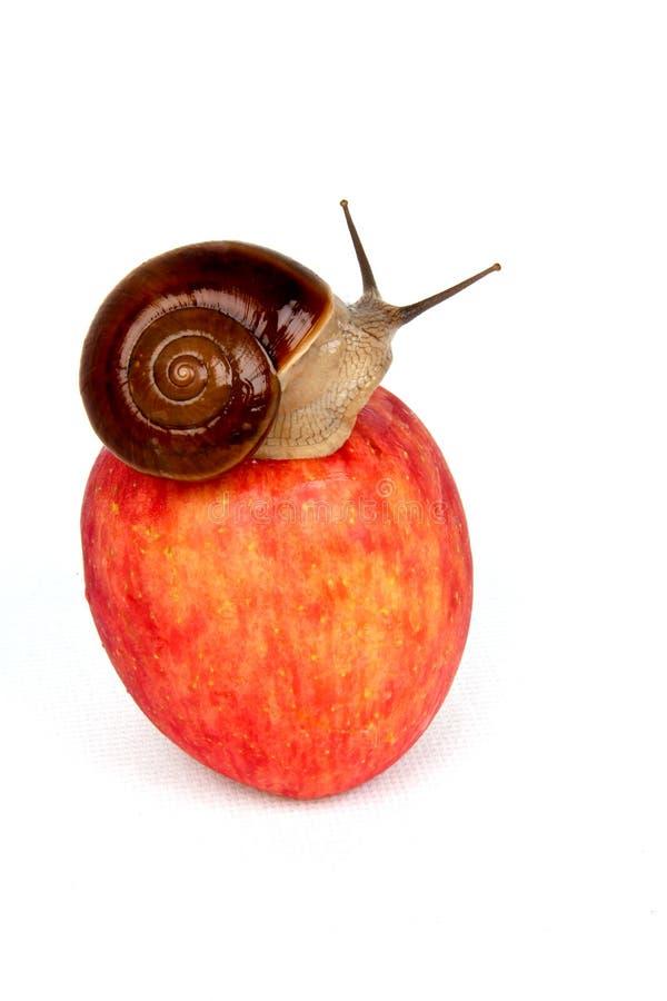Яблоко и улитка стоковое фото rf