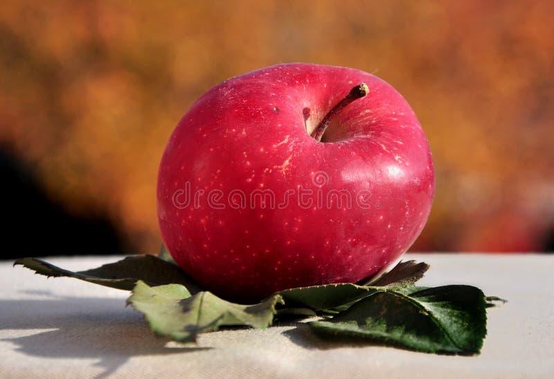 Яблоко на листьях стоковая фотография rf
