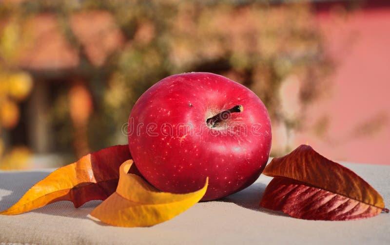 Яблоко на листьях стоковое изображение