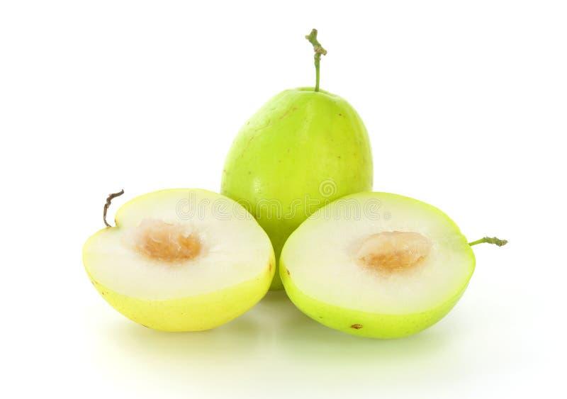 Яблоко обезьяны стоковые фото