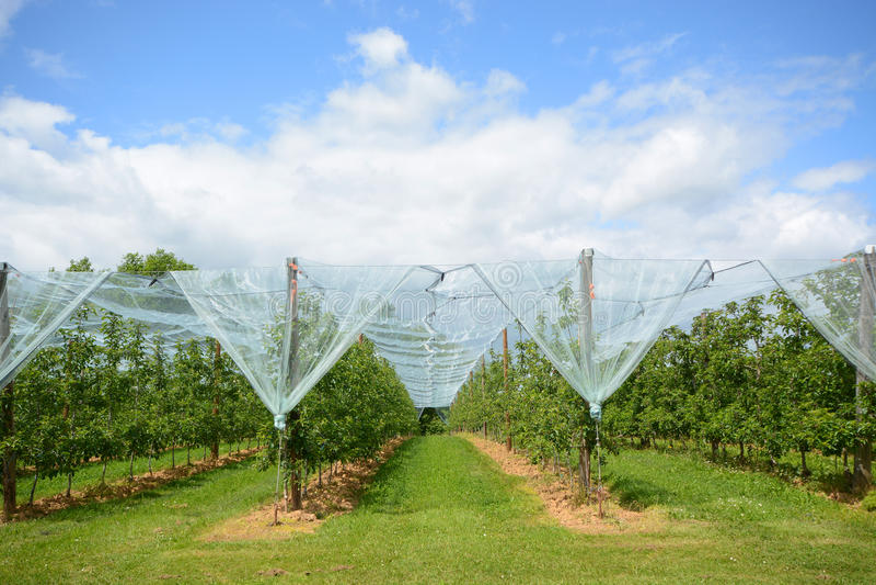 Яблоневый сад в Франции стоковое фото rf