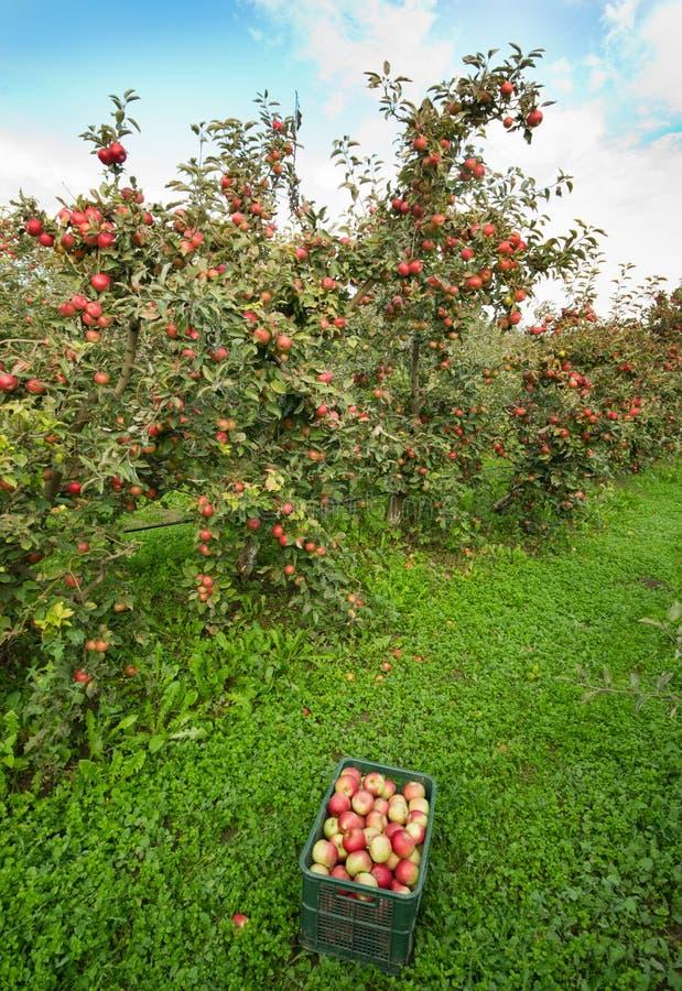 Download Яблоневый сад стоковое изображение. изображение насчитывающей природа - 37928005