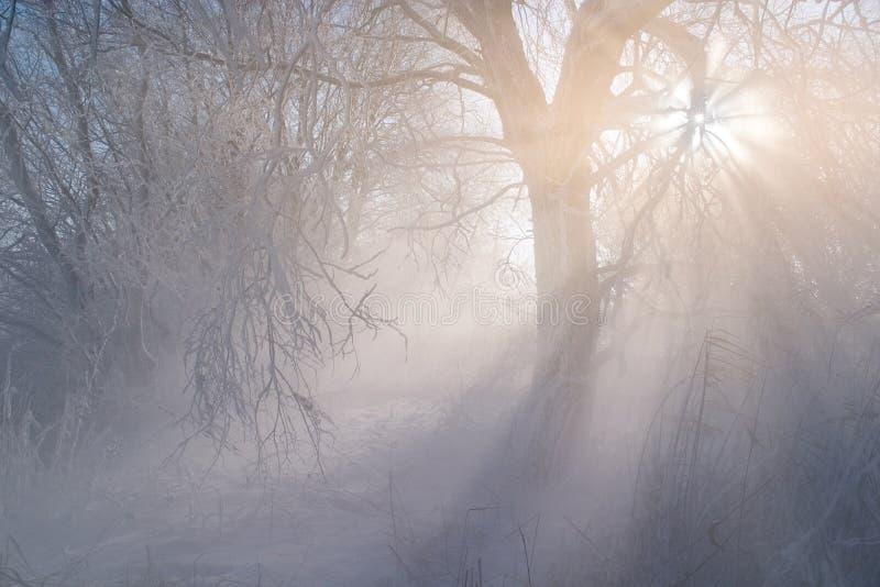 Явление погоды зимы Тяжело полный влажного воздуха конденсирует на поверхности ледяных кристаллов стоковые изображения