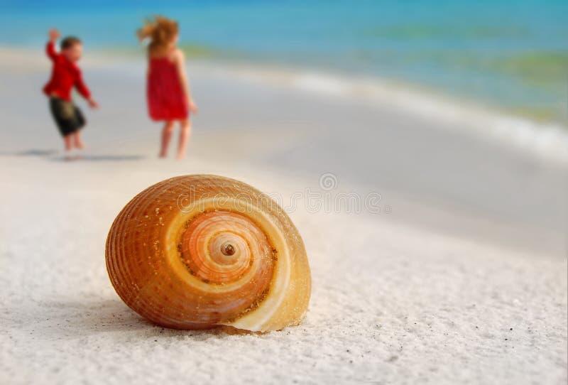 ягнит seashore seashell стоковая фотография rf