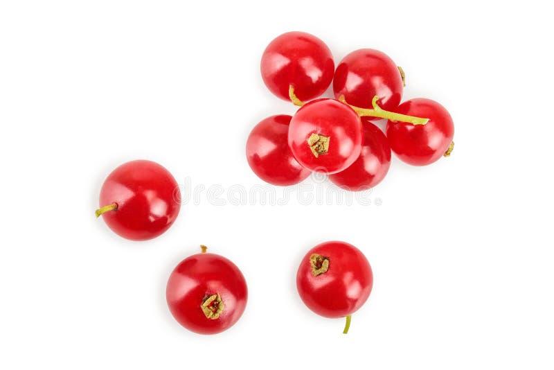 Ягода красной смородины изолированная на белой предпосылке r r стоковое фото rf