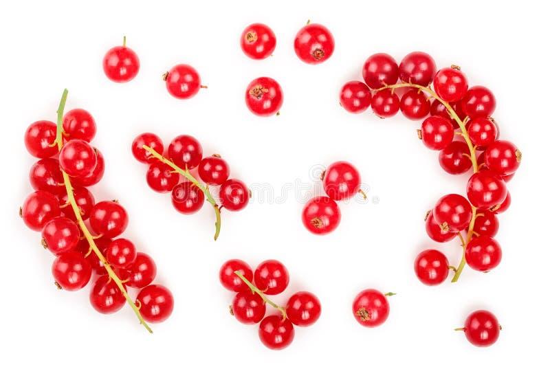 Ягода красной смородины изолированная на белой предпосылке r r стоковое изображение rf
